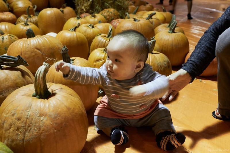 pumpkin__16.jpg