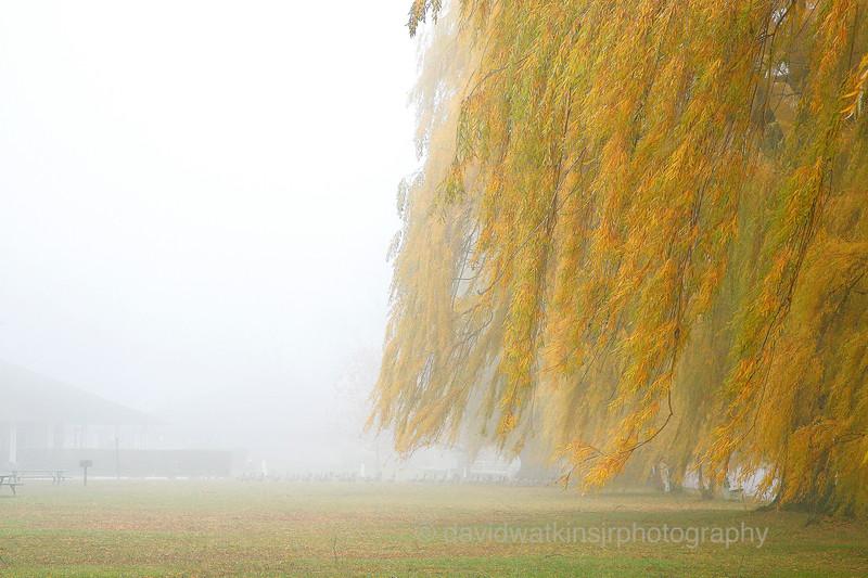 Fog in the Willows,Stewart Park.No.1.jpg