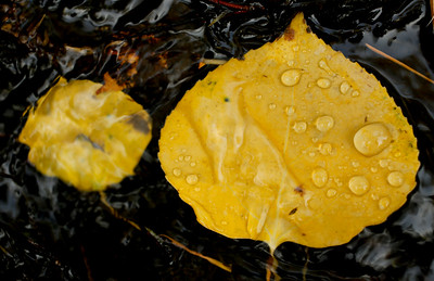 Photos: Fall Colors Returning to Boulder County