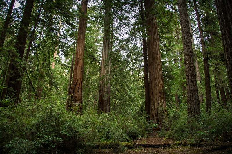 Redwood-24.jpg