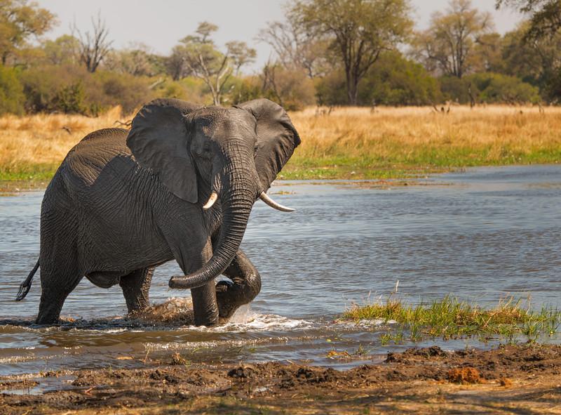 2014-08Aug-Okavango Masters-45-Edit.jpg