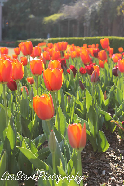 Atlanta Botanical Garden-10.jpg