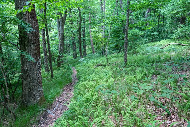 Greasy Cove Trail -- 5,150'