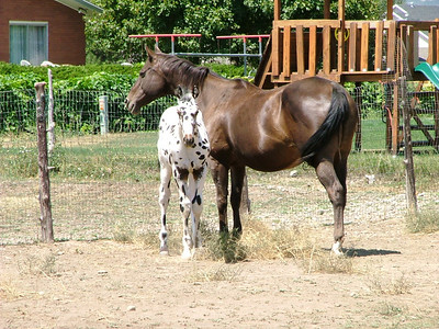 Kristina's Horses