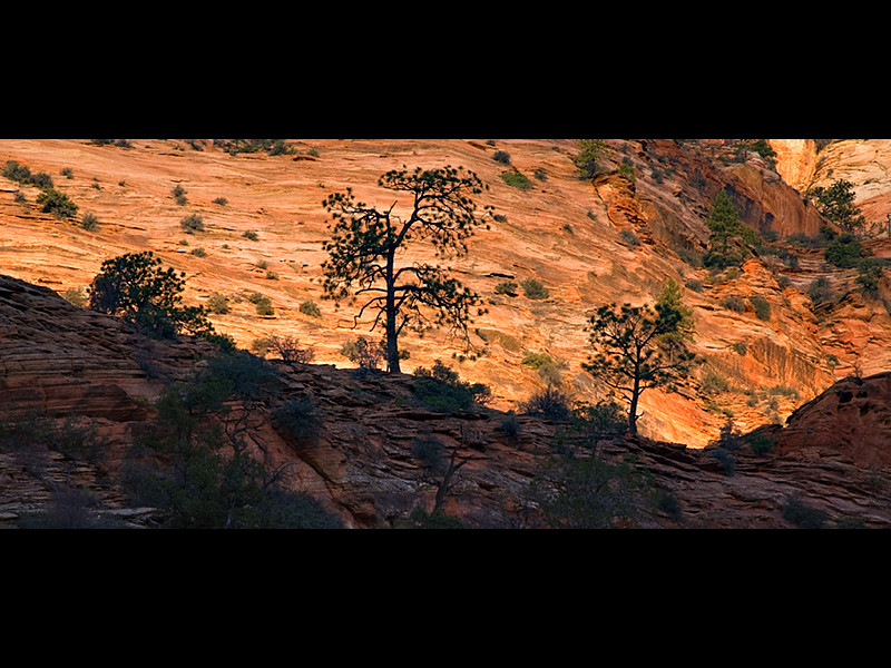 Zion Plateau.jpg