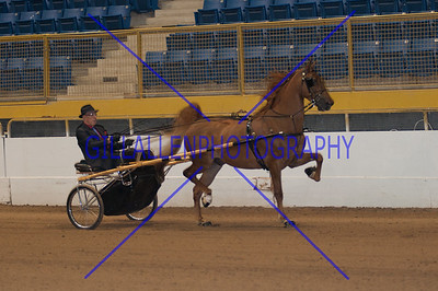2013 Fall Charity Horse Show Sep 6th PM