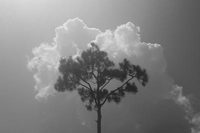 Florida Black and White Landscapes