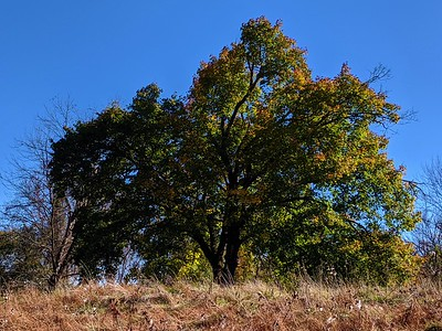 11.4.19 Invasive Removal in West End Ellicott City