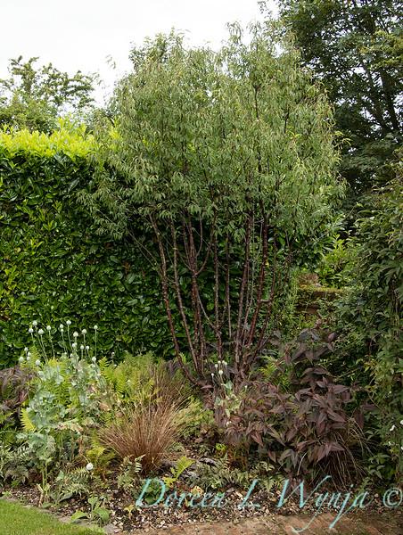 Beechleigh Garden - Jacky O'Leary garden designer_2964.jpg
