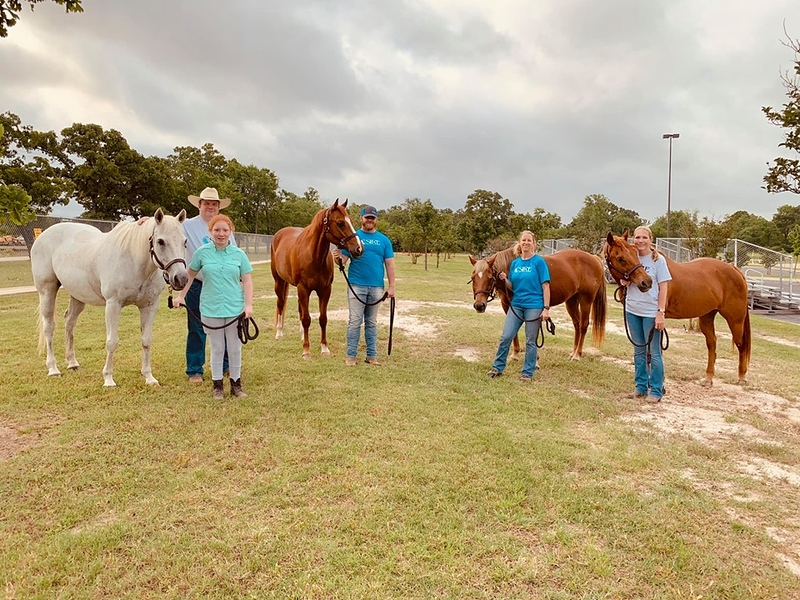 Vol and horses getting ready.jpg