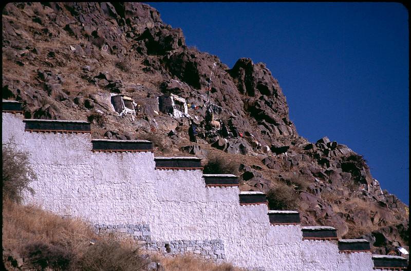 Tibet_Shanghai1_100.jpg