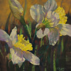 FOURTH PLACE PAINTINGS CATEGORY:  Backlit Daffodils