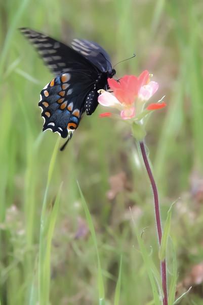 wildflowers032820-2.jpg