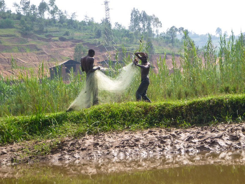 Rwanda17-kingfisher-1010791.jpg