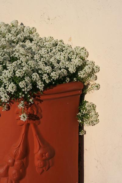 6969 LHStomp flowers.jpg