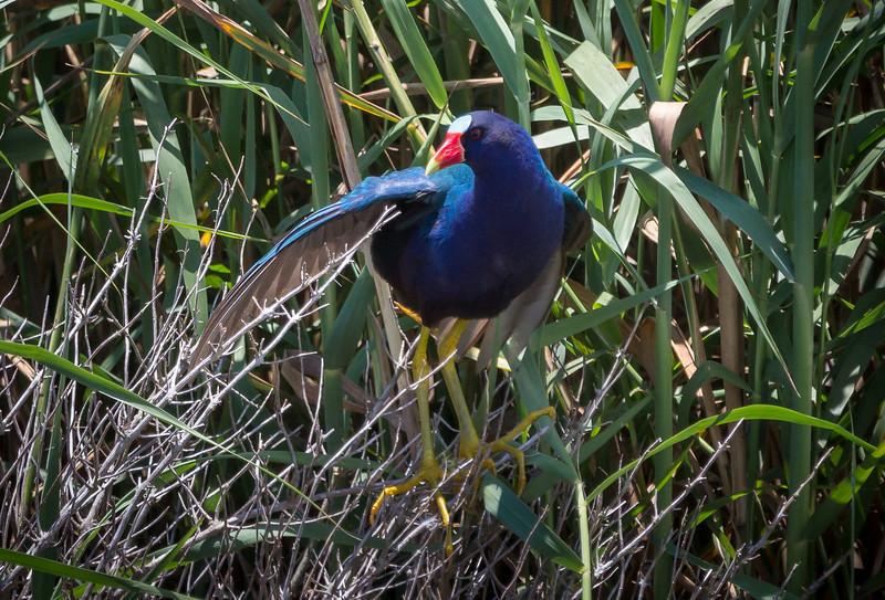 Taken at Anahuac on the final leg of Shoveler's Pond Loop.