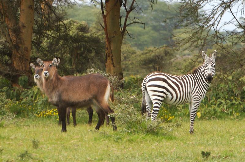 Kenya - 35.jpg