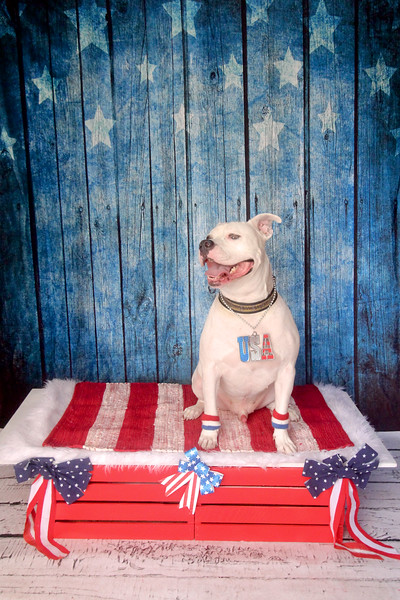 Red, White, & Blue July 4, 2020