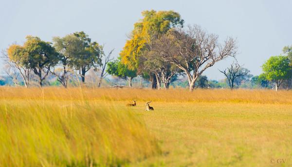 Botswana - I