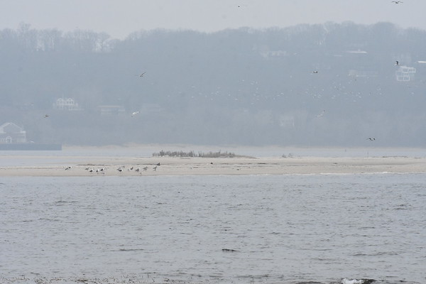 Seals-Sandy Hook Bay