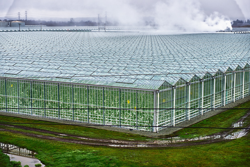 Greenhouse I