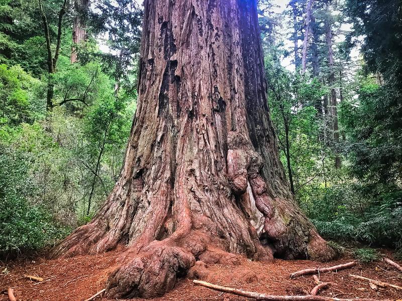 Redwood-11.jpg