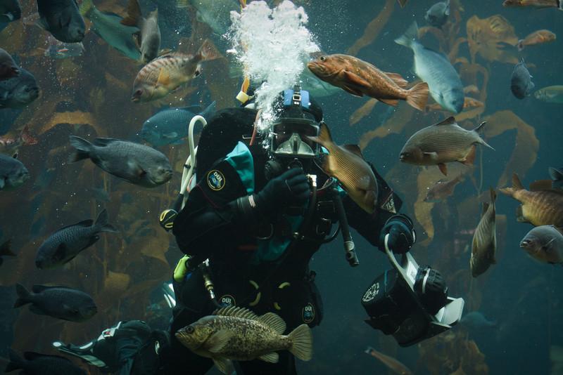 Monterey Bay Aquarium-2559.jpg