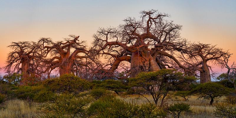 Botswana-06790-Edit.jpg