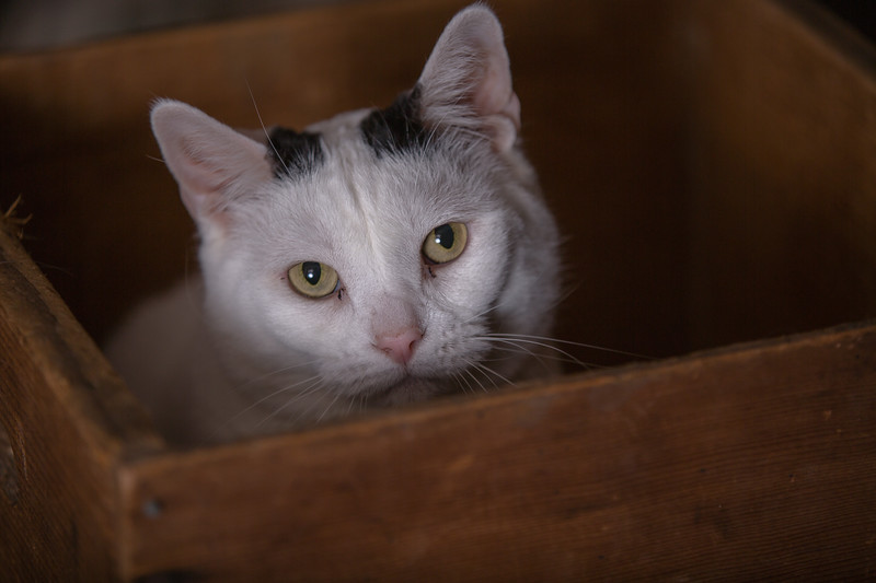 Polzin Cats-17.jpg