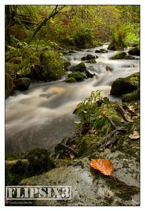 Wyming Brook - Sheffield