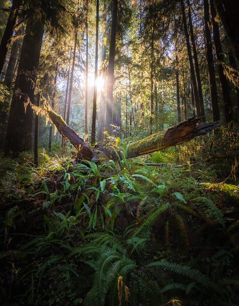 19-12-31 redwoods 0012-732-HDR-Pano.jpg