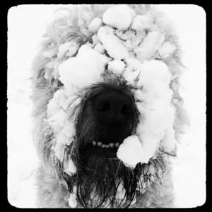 Snow Day - Feb 9, 2014