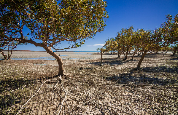 Pardoo Seascapes