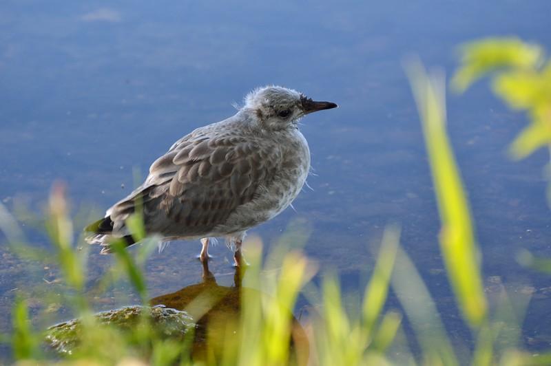 wildlifesweden (3).JPG