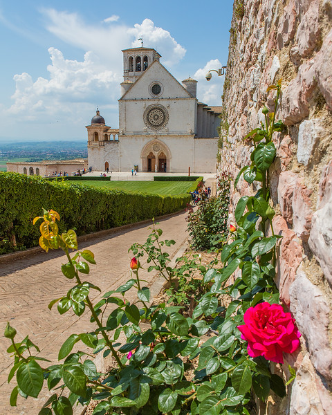$125 - Rose Of Assisi , Assisi , Umbria , Italy