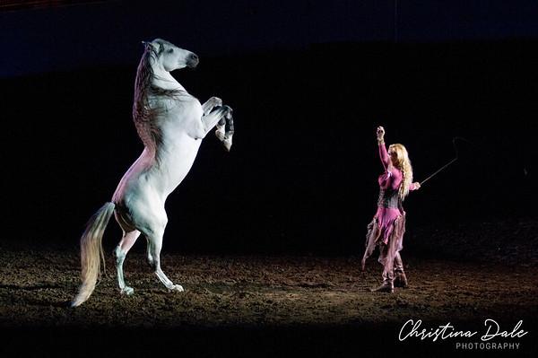 2013 World Horse Expo