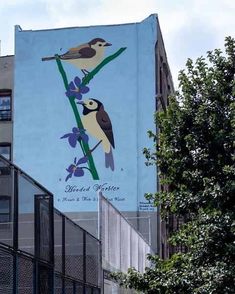220 (8-19-19) Hooded Warbler-1.jpg