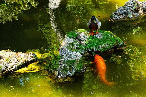 TH-Japanese Garden