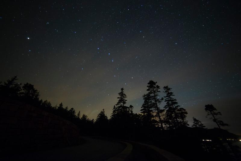 Acadia Tree Silhouettes