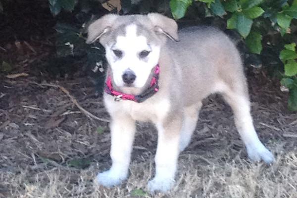 Brooke's Puppy