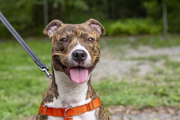 Dog Love Daycare 07-24-21
