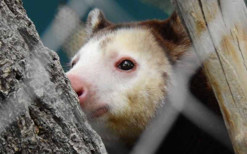 Cheyenne Mtn Zoo 2019 (1050).JPG