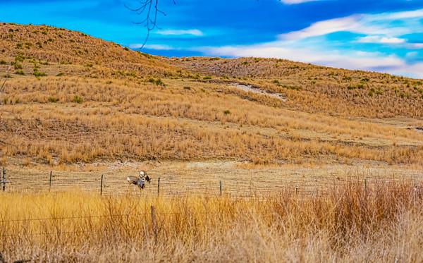 Duckbar Ranch - Mark Johnson Edits