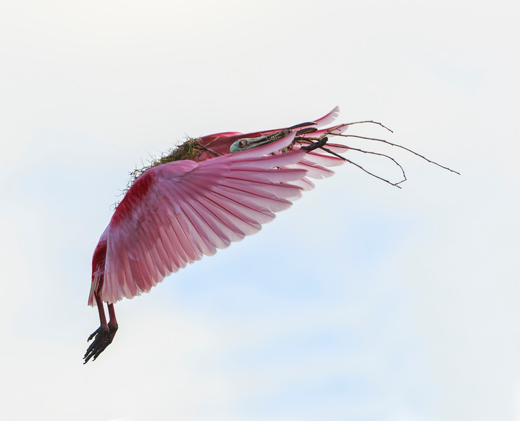 PINK BIRD, DIRTY FEET