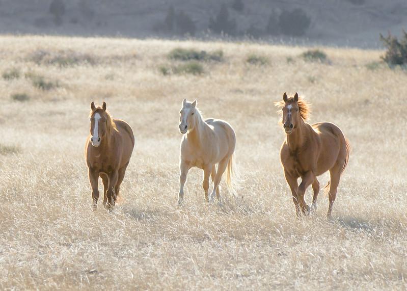 Horses Near Colstrip MT