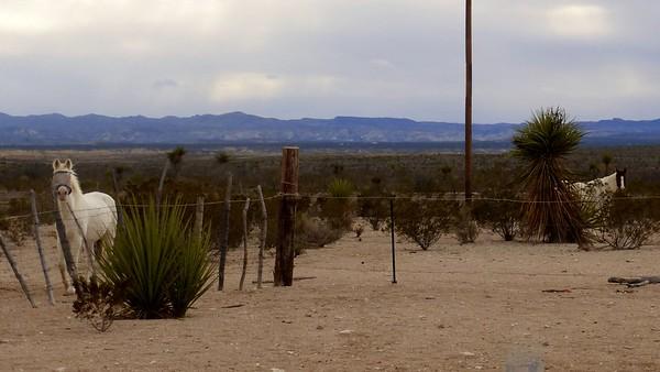 2014 Santa Elena Canyon