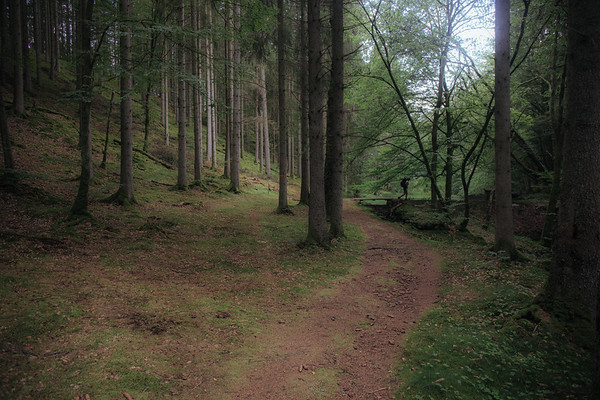 Hike 40 km Osby-Vittsjö 2019
