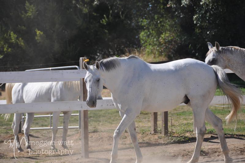EB&Horses-141.jpg
