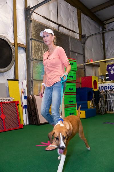 on Command dog Training June 2019-5135.jpg