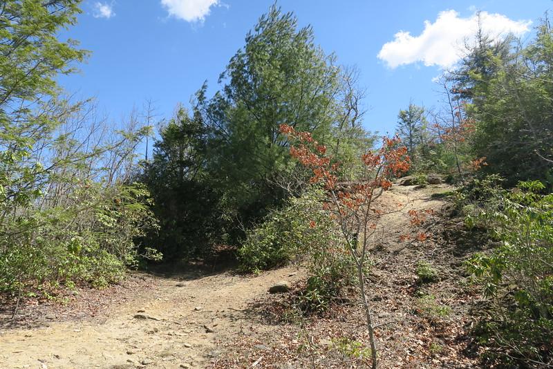 Devils Elbow Trail -- West Fork Way-Shelton Pisgah Trail Junction - 3,820'